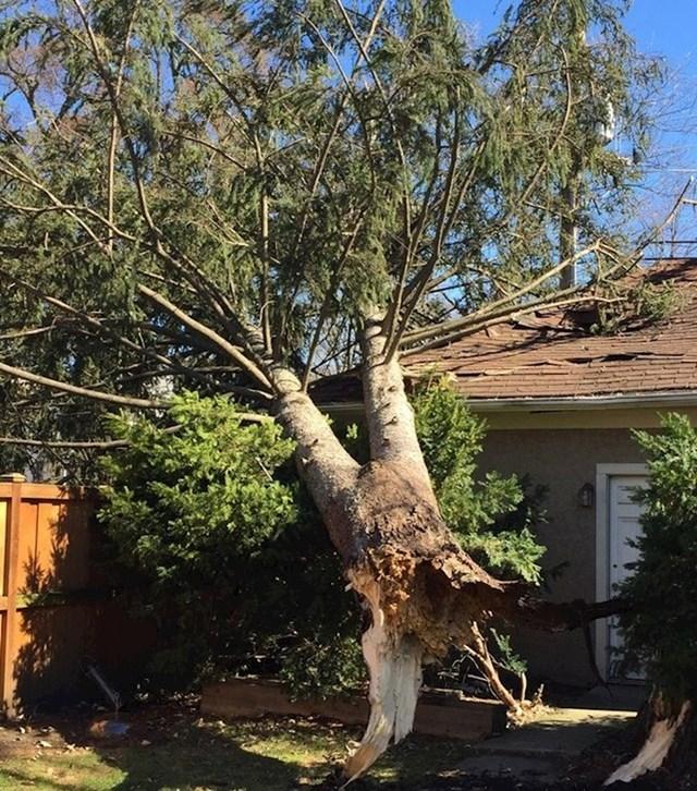 """""""Moji roditelji su prije nekoliko tjedana stavljali novi krov na kuću. Danas se drvo srušilo na krov."""""""