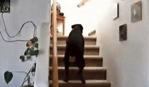 Pas se nije usudio popeti uz stepenice, smijat ćete se kad vidite čega se toliko bojao