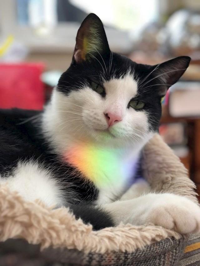Ova maca je bila na pravom mjestu u pravom trenutku. Svjetlost se odbijala i nacrtala dugu na njoj.