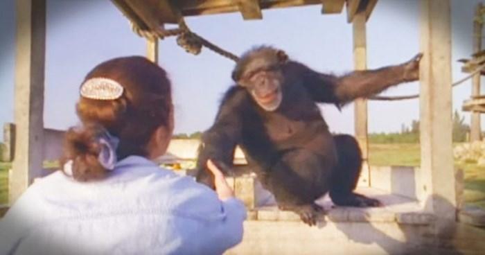 Mislila je da je čimpanza neće prepoznati nakon 18 godina, kamere su snimile nevjerojatnu scenu