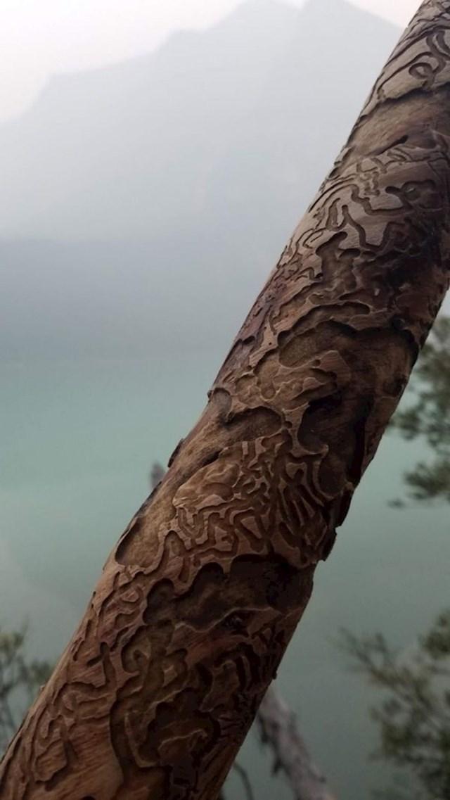 Termiti su ovaj komad drveta pretvorili u umjetničko djelo.
