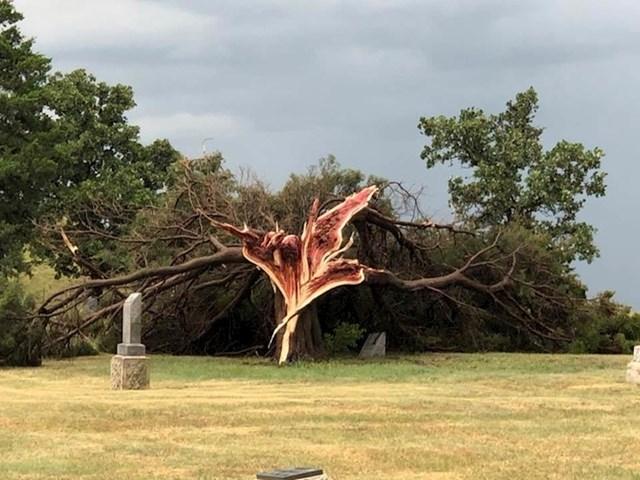 Staro drvo uništeno tijekom velike oluje