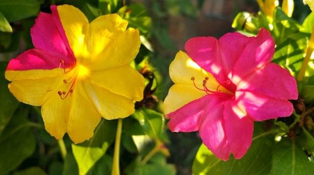 Ova dva cvjetića se savršeno upotpunjuju.