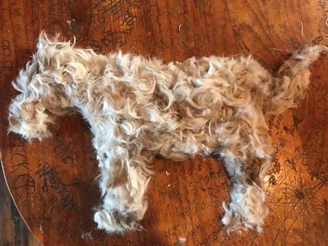 Ovo nije pas, nego njegova dlaka nakon šišanja.