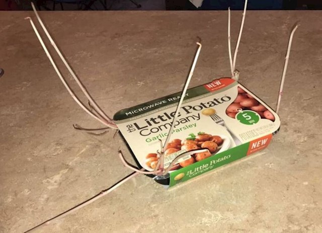 Zaboravili su da su kupili ove krumpiriće koji se podgrijavaju u mikrovalnoj. Preko zimskih mjeseci se nešto dogodilo...