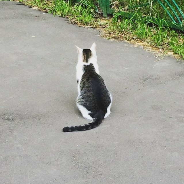 Ova mačka izgleda kao da na leđima ima drugu mačku.