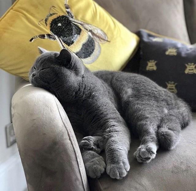 """""""Naša britanska kratkodlaka maca voli spavati na fotelji."""""""
