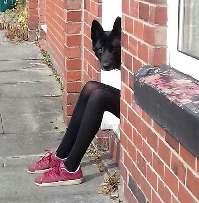 Ovaj pas ima duuuuge noge...