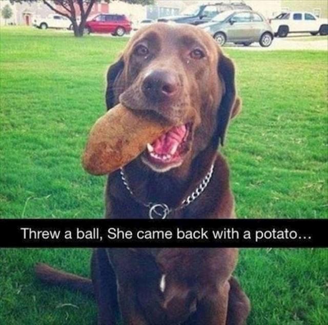 Bacili su mu lopticu, vratio se s krumpirom.