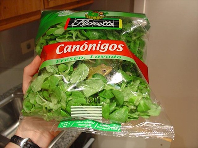 """""""Ova žaba ima čelične živce. Zatvorena je u vrećici salate, no skroz je mirna."""""""