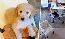 VIDEO Par je bio šokiran kad su vidjeli što je dadilja radila njihovom psiću, javili su joj se preko kamere i mikrofona