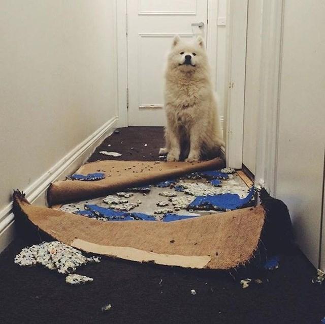 """""""Hej, renovirao sam hodnik dok vas nije bilo... Kako vam se sviđa?"""""""