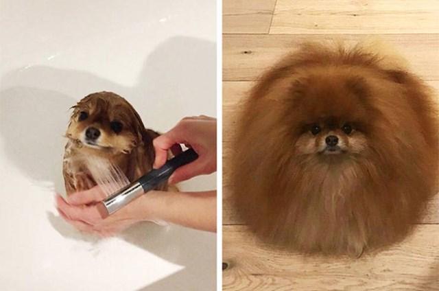 Pas prije i nakon tuširanja