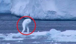 VIDEO 5 misterioznih stvorenja snimljenih kamerom: Ni stručnjaci nisu mogli objasniti o čemu je zapravo riječ