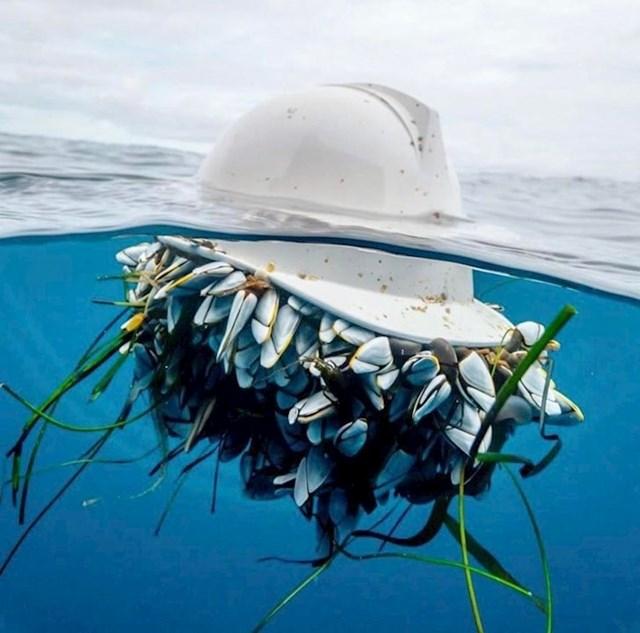 Bačena kaciga je nekim morskim životinjama postala mobilni dom...