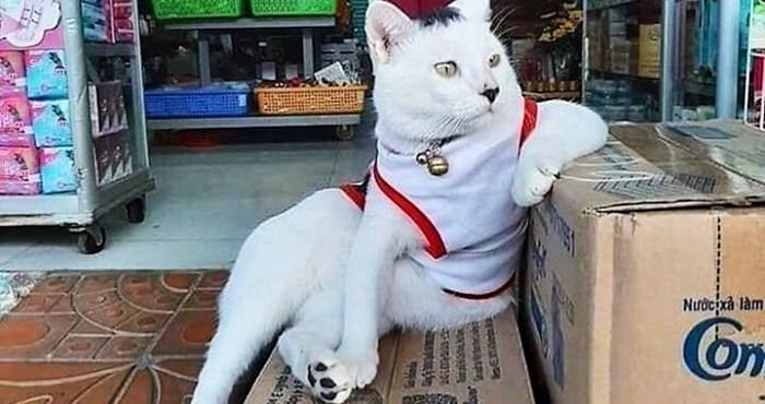 20 smiješnih slika mačaka koje se ponašaju kao da je dućan njihov