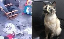 Nevjerojatna snimka pokazuje kako je mačka spasila bebu koja je umalo pala niz stepenice