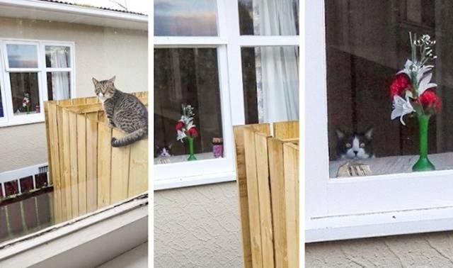 Mačka je bila šokirana kad je vidjela da njen vlasnik slika tuđu mačku...
