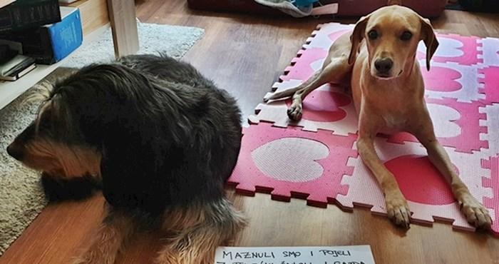Vlasnik je svoje pse nazvao malim šupcima, a napisao je i zbog čega su zaslužili ovu titulu