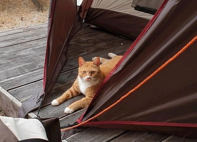 """""""Prvi put kampiramo. Ovo nije naša mačka, ali nam se odlučila pridružiti."""""""