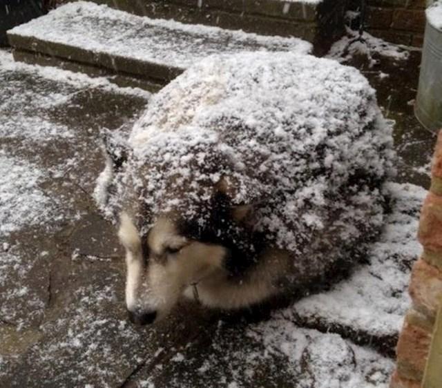Pas ili jež?