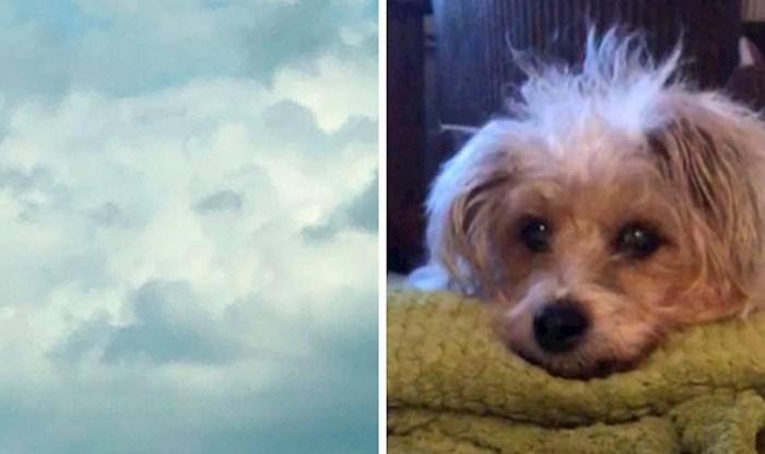 Svog psa je vidjela na nebu par sati nakon što je uginuo, drugi su pokazali slične primjere