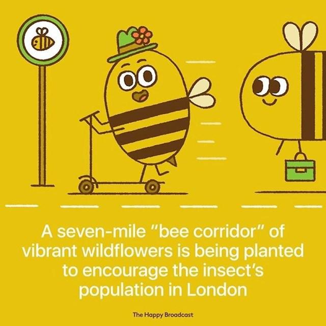 """Sedam kilometara """"pčelinjih koridora"""" živopisnog cvijeća sadi se kako bi se potaknula populacija insekata u Londonu."""