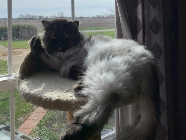 """""""Evo što moja mačka misli o činjenici da sam počeo raditi od kuće."""""""