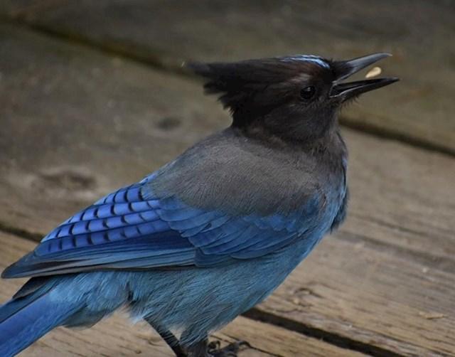 Slikala je prekrasnu pticu točno u trenutku kad joj je hrana lebdjela u kljunu.