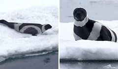16 crno-bijelih životinja koje će vas oduševiti svojim unikatnim izgledom
