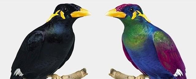 Što ljudi vide (lijevo) i što ptice vide (desno)