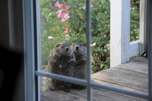 Susjedi su se došli upoznati s novim vlasnicima kuće.