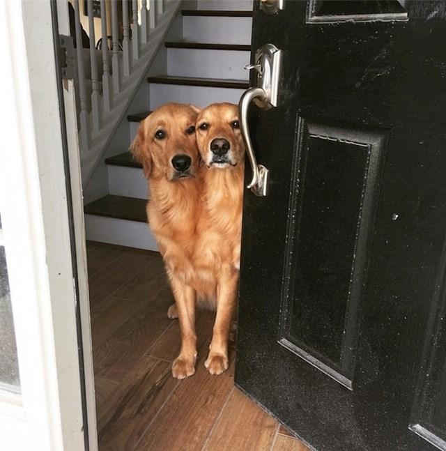 Ovi psi na prvi pogled izgledaju kao jedan dvoglavi pas.