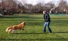 Vlasnica je posipala pepeo uginulog psa, kasnije je na slikama primijetila njegov zadnji pozdrav