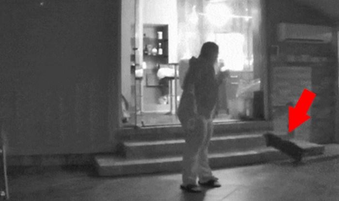 Kad pretjeraš s čišćenjem stakla: Žena je izlazila iz kuće pa vidjela urnebesnu scenu s mačkama