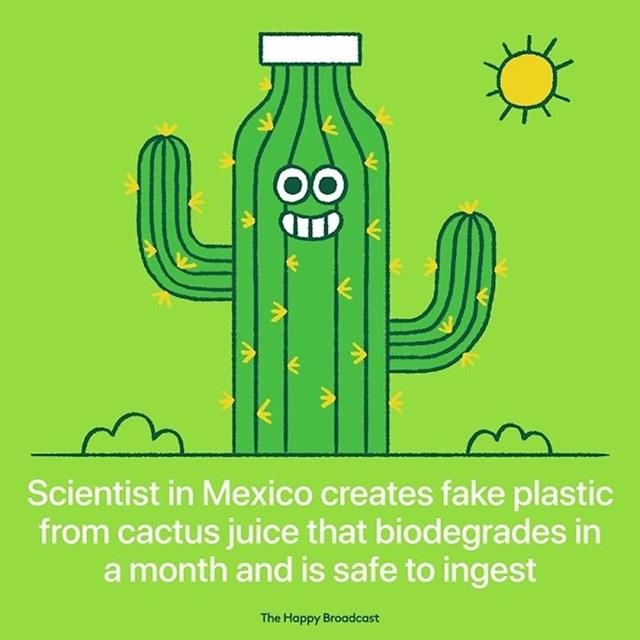 Znanstvenici u Meksiku stvorili su lažnu plastiku od kaktusovog soka koja se razgradi u mjesec dana.