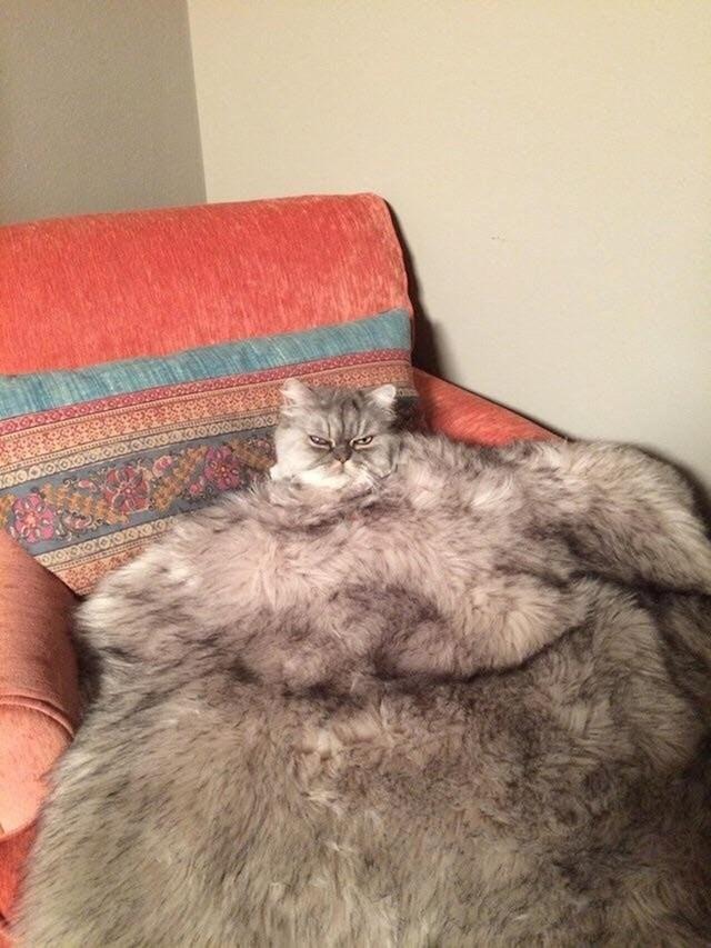 Što je ovdje pokrivač, a što mačka?