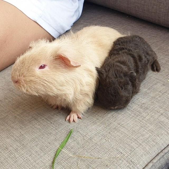Albino mama zamorac i njeno tamno dijete