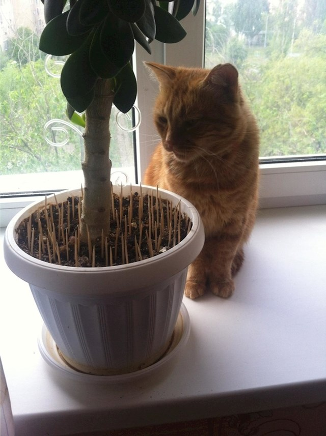 Ovako vaša mačka neće više napadati biljke u kući ili stanu.