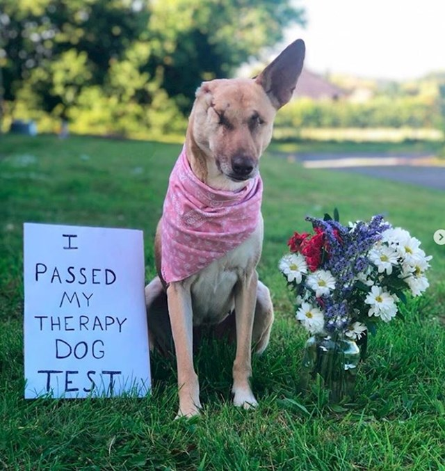 Trudnu kujicu su upucali 17 puta. Maggie su spasili volonteri i danas ima vlasnika koji je voli. Radi kao terapijski pas.