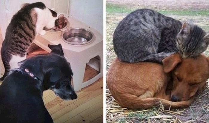 15 slika koje dokazuju da psi i mačke uvijek razviju jedan poseban odnos