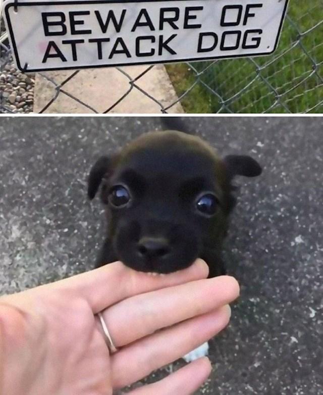 Oprez, oštar pas!