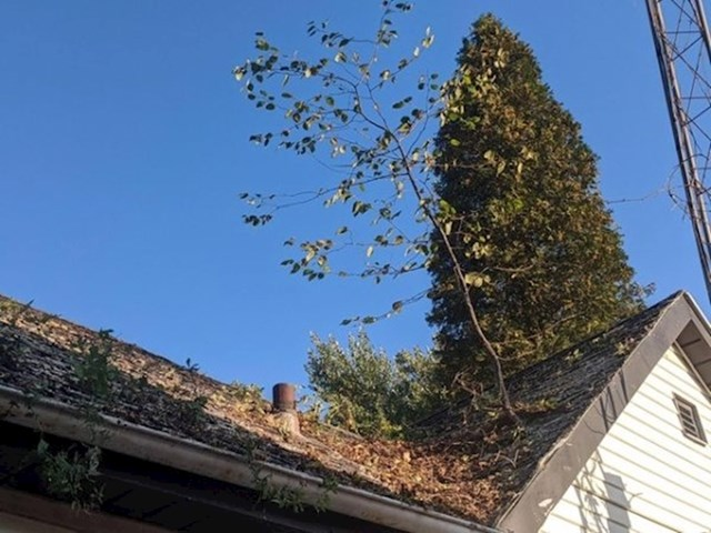 """Na krovu nam raste drvo!"""