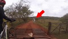 """Grupa """"hrabrih"""" biciklista je htjela otjerati bika, a onda su se osramotili pred kamerom"""
