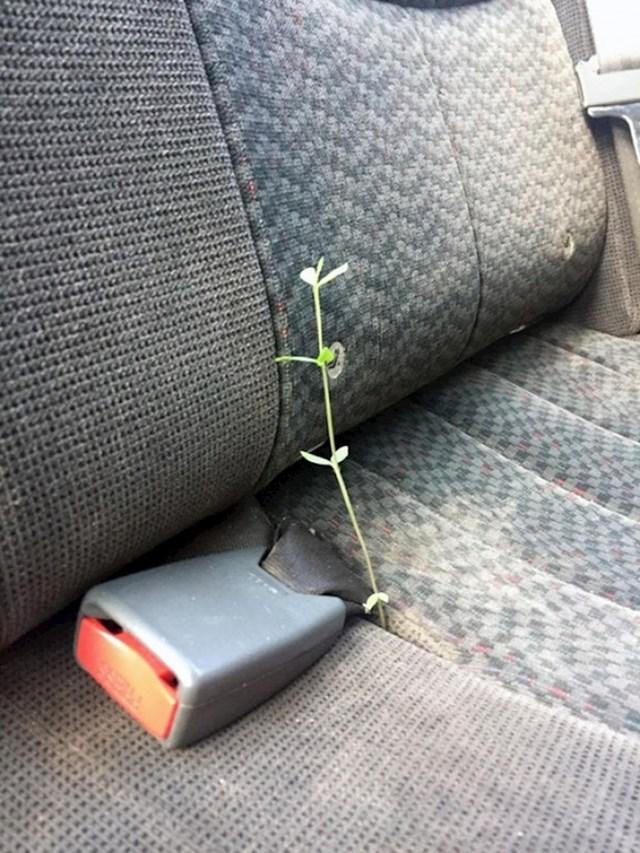 Nešto im raste u autu...