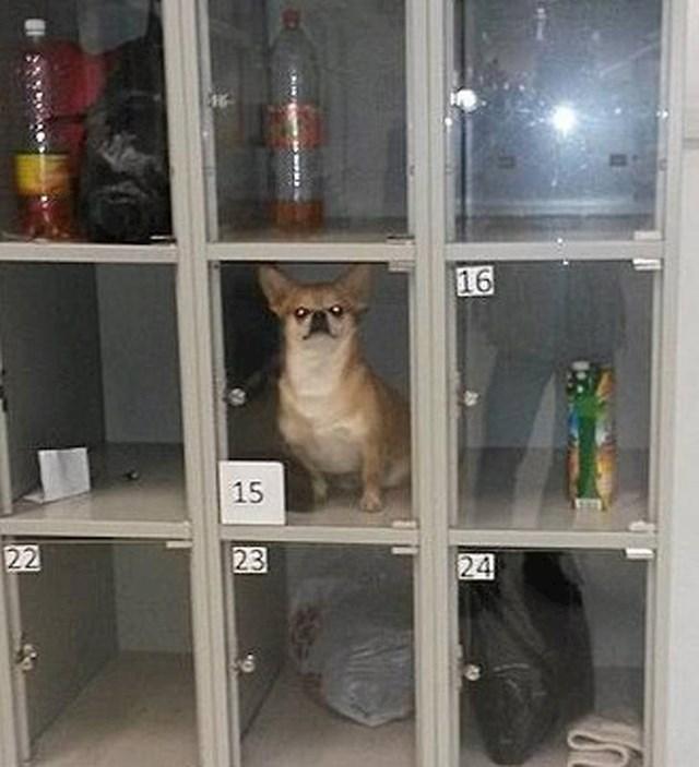 Pogledajte gdje je netko ostavio svog psa.