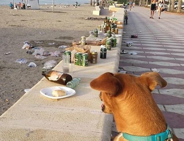 Zabranili su psima da budu na ovoj plaži jer su neki ljudi bili zabrinuti da će napraviti nered. Čini se da su se drugi ljudi potrudili bolje nego psi.