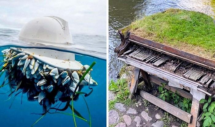 Priroda uvijek pronađe način da pobijedi ljude, a ove slike su neki od zanimljivijih primjera