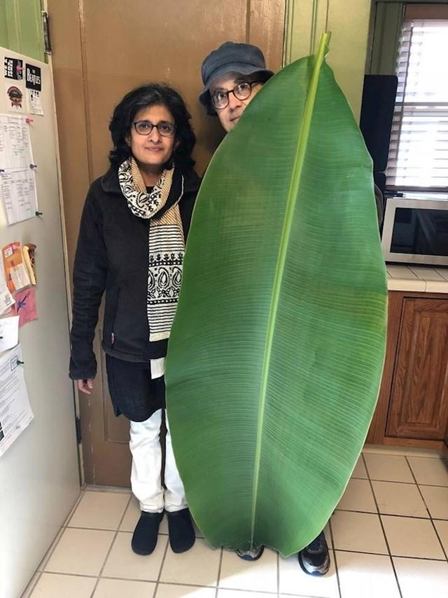 """""""Tata je bio jako ponosan kad je našao ovaj ogromni list stabla banane."""""""