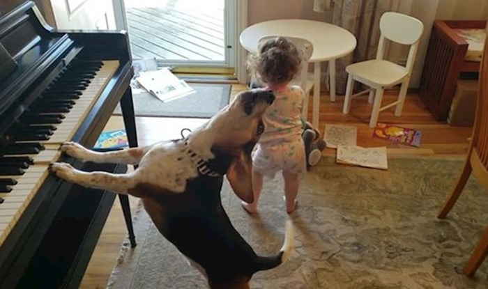 VIDEO Tata je slučajno snimio urnebesnu scenu u kući: Klinka je plesala, a pas svirao klavir!